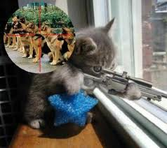Cats don't kill people (or dogs) guns do