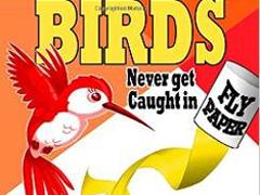 Birds-never-get